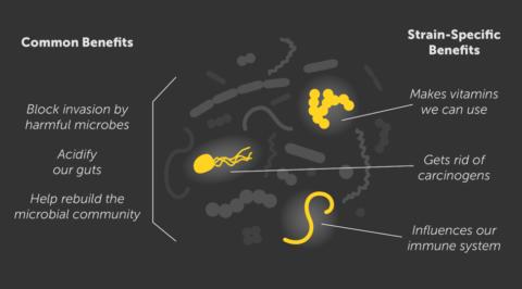 Benefits of Probiotics Infographic